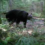 French River Bear Outfitters (FRBO) profile photo