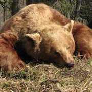 Alberta Bear Hunts profile photo