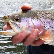 Tumbling Trout profile photo