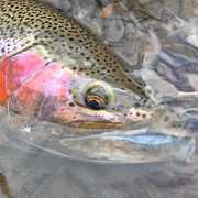 Cattaraugus Creek Outfitters (CCO Fly Fishing) profile photo