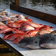 Central Florida Sport Fishing Charters profile photo