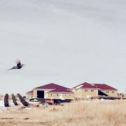 Dakota Prairie Lodge and Resort profile photo