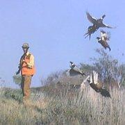 Good Ol Days Pheasant Hunting profile photo