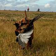 2C Pheasant Hunt profile photo